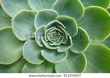 Green cactus flower background (Succulent plan)