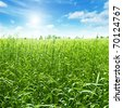 Green field and blue sky with sun. - stock photo