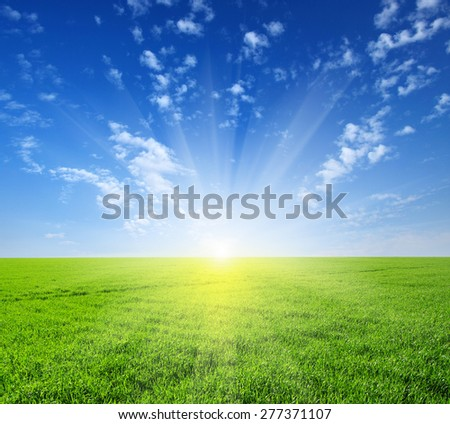 Green field,blue sky and sun.