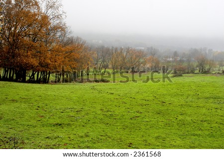Green field in a foggy day