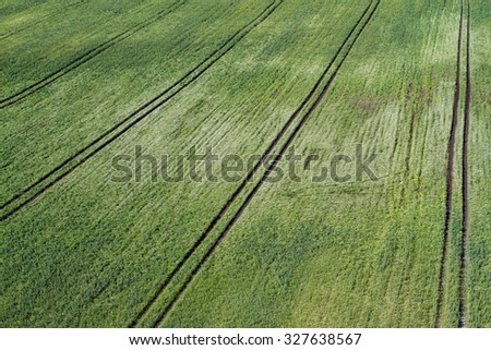 green field of rape seed