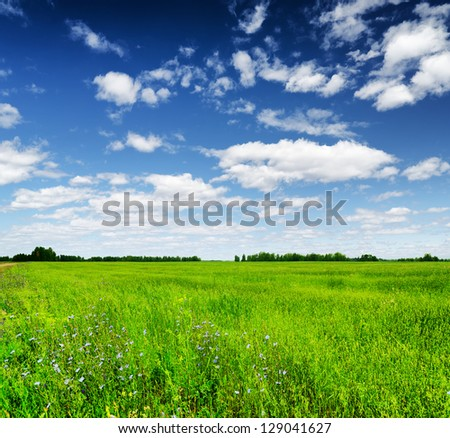 Green field under the blue sky. Summer landscape.