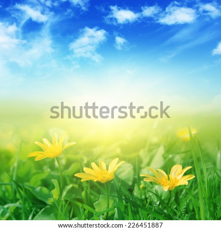 Green field with spring flowers and sunlight.
