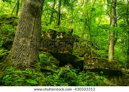green forest full of moss covered stones