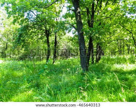 Green forest on summer