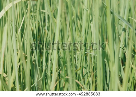 Green grass (real color)