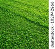 Green grass texture - stock photo