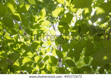 green leaf as tranparency sunlight