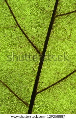 Green leaf macro in vertical image. Right direction. Green background