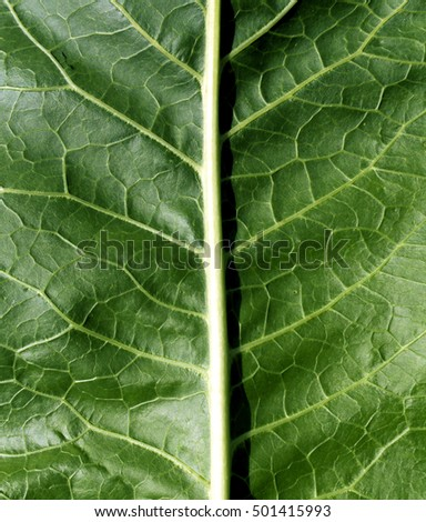 Green leaf texture. Natural background an d texuture for design.