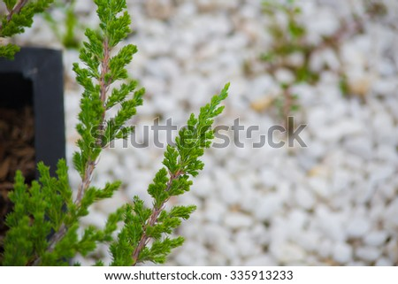 Green leaf with White Curve Rock,Waterfall stone Nature background.