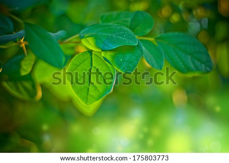 Green leaves background, leaves