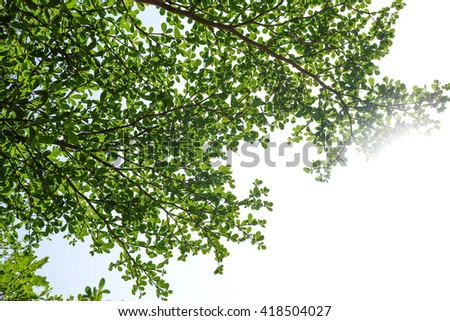 green leaves in garden