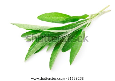 green leaves of sage, isolated on white background