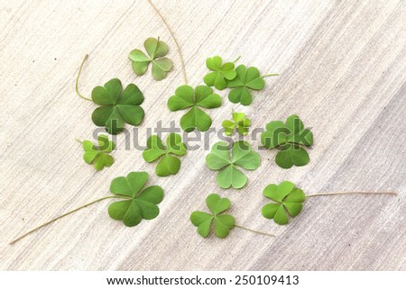 Green leaves on stone floor background