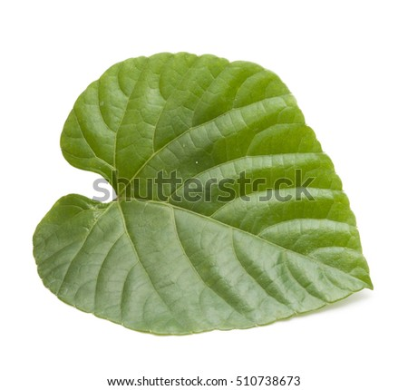 Green leaves shaped  heart on white background