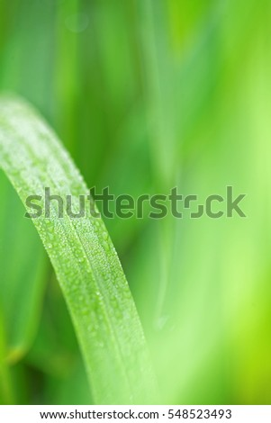 Green long leaves of grass. Soft background. Close.