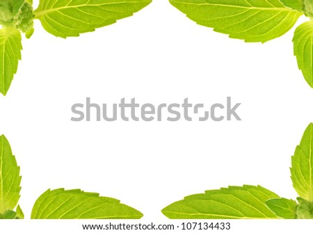 green mint leaves frame isolated on white background