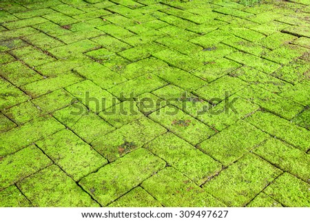 Green moss on old brick in garden.