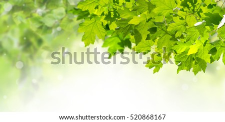 Green nature background with maple leaves for your design