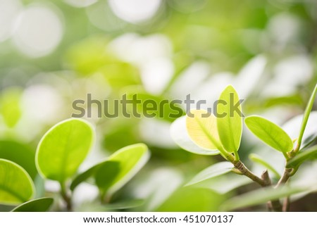 Green nature with copy space using as background or wallpaper.