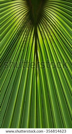 Green palm tree leaf background in close view