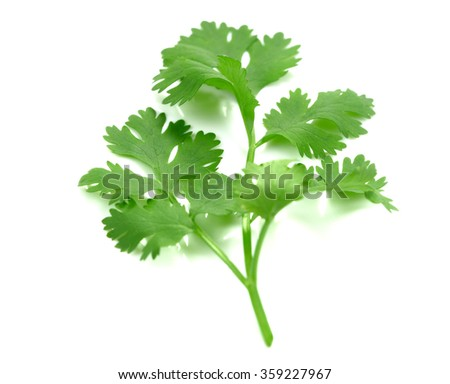 green parsley sprig isolated on white background