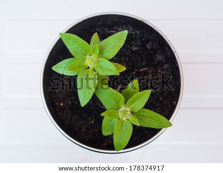 Green pot in plant