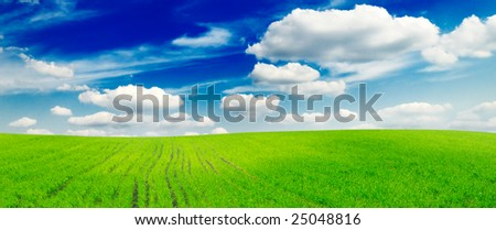 green spring field covered by a grass