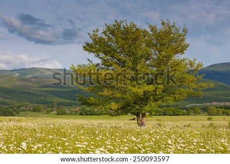 Path Through Pasture Oak Trees Stock Photo 582436219