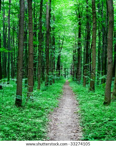 green summer nature. pathway in the forest