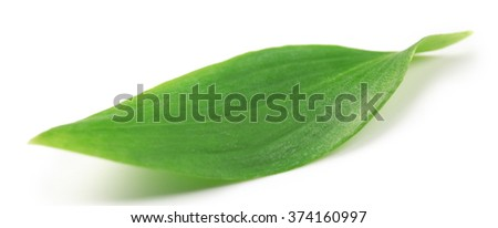 Green tea leaf, isolated on white