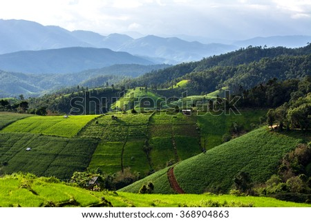Green Terraced Rice Fields  in North Thailand. Pa Bong Piang rice paddy field in Chiang mai Thailand