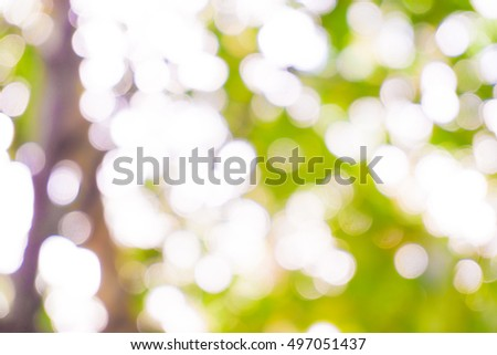 Green tree blurred background with sun beam, Natural scene