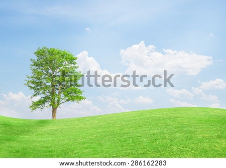 Green tree on a field with blue sky background