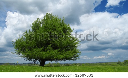 green tree on summer field