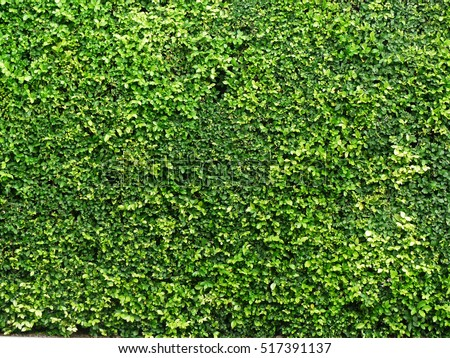 Green Bush Seamless Tileable Texture Stock Photo 137526452 ...
