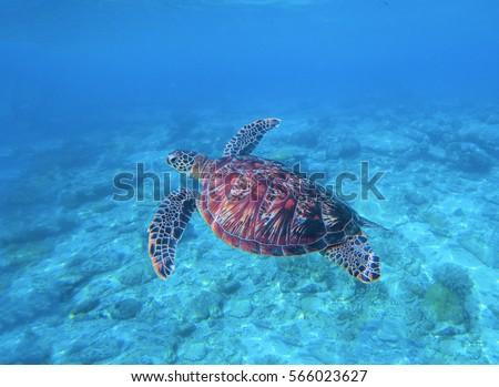 animal water