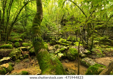Green undergrowth with moss and water. Torrente del tasso (creek of the rate), Pazzon, Caprino Veronese, Verona, Italy