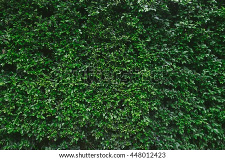 Green Wall Background with Hipster Soft Color Effect Added