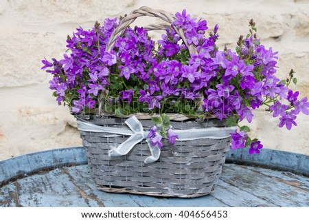Grey basket with a flowers violets -Harvest, agriculture