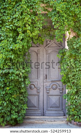 Grey wooden old door on background of wall with ivy