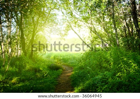 ground road in summer green forest