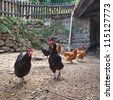 Group of chicken in an old hen house on the countryside of France - stock photo