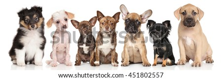 Group of cute puppies. Portrait on white background
