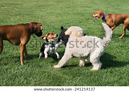 group of dogs playing outdoors