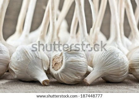 Group of garlic on a linen background material