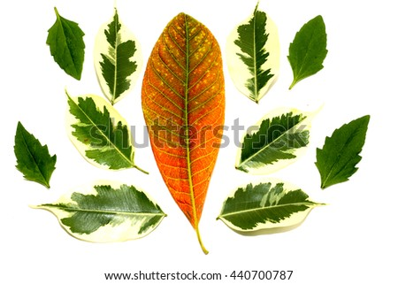 group of green color of  leaf and red color leaf on white paper,isolated on white