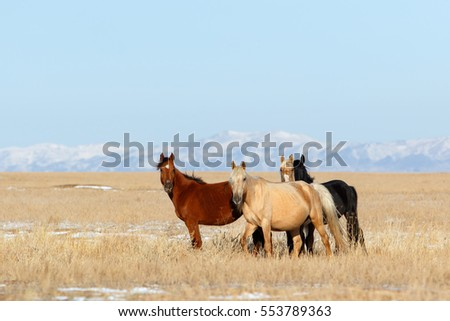 Group of horses on the grazing field on mountains background