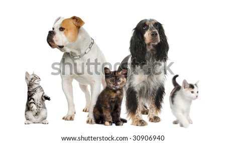 Group of pets : dogs and cats in front of a white background